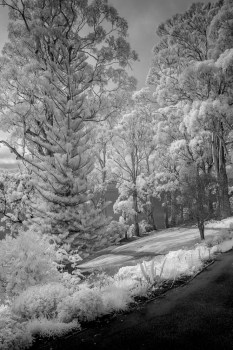 portarthur-tasmania-historic-site-infrared-24159